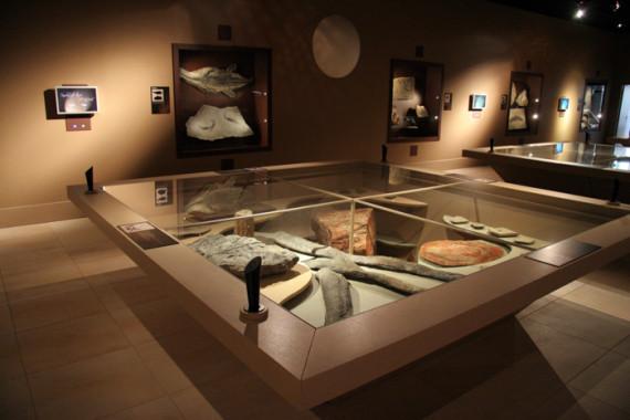 Muséum d'Histoire Naturelle de Grenoble (38) - 10