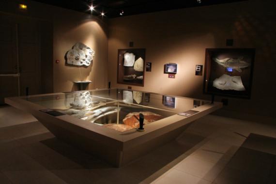 Muséum d'Histoire Naturelle de Grenoble (38) - 2