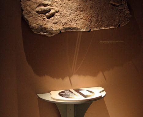 Muséum d'Histoire Naturelle de Grenoble (38) - 8