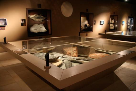 Muséum d'Histoire Naturelle de Grenoble (38) - 9