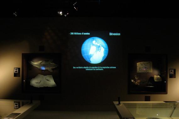 Muséum d'Histoire Naturelle de Grenoble (38) - 5