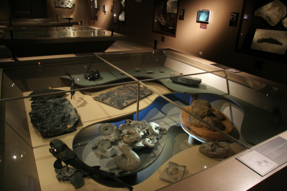 Muséum d'Histoire Naturelle de Grenoble (38) - 7